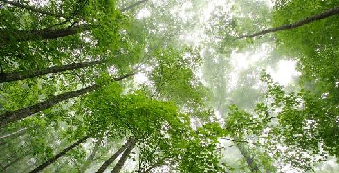 green-living1